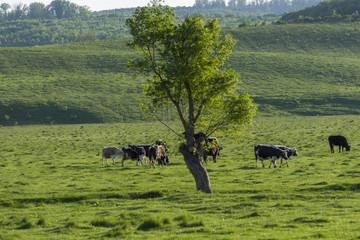 romania countryside lanscape photographs
