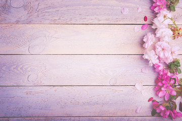 Beautiful pastel colored cherry blossoms on rustic wooden background