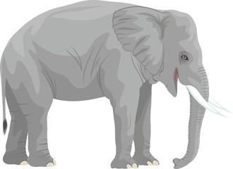 vector african elephant