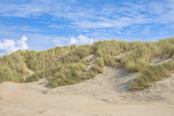 Wall Mural - Dunes by the ocean