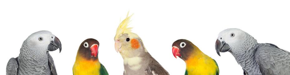 Photo sur Plexiglas Perroquets Five tropical birds