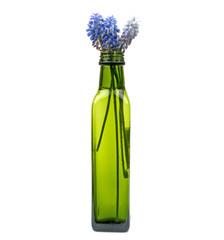flowers in a green bottle on a white background