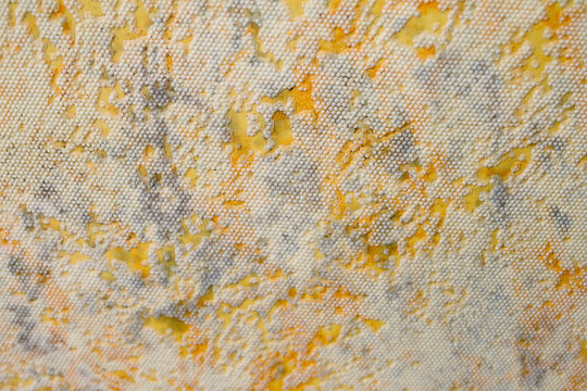 Mold on the wall. Mold on the wallpaper. Close-up