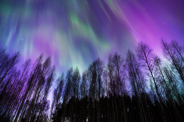 Aurora Borealis, Northern Lights, above boreal forest in Finland.