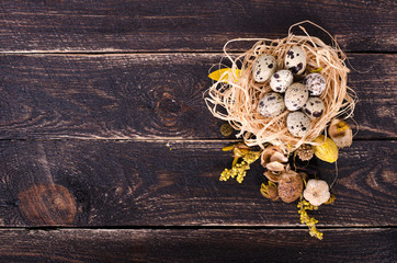 Quail nest with spotted eggs, dried plants on a wooden background. Free space for your text