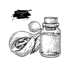 Nutmag essential oil bottle and mace fruit. Hand drawn vector illustration. Isolated drawing