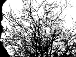 Silhouette of trees against the sky