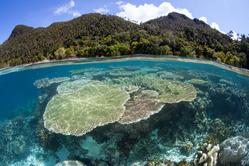 Beautiful Coral Reef and Island in Raja Ampat