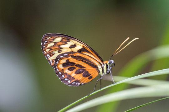 Schmetterling vor unscharfem Hintergrund