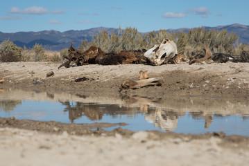 Horse Skeleton in Nevada