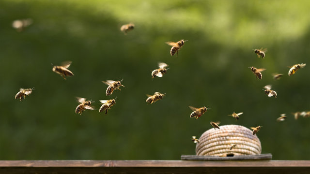 Am Bienenkorb