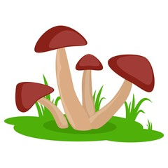 Mushrooms on the grass cartoon vector icon isolated on white background. Edible or inedible mushroom.