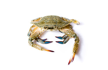 Crab isolated on white background.