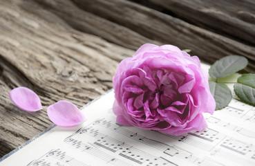 Alte Musiknoten mit erblühter Rose auf Holz Hintergrund (Rosaceae), Liebeskummer, Trauer, Tod