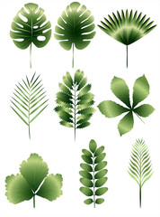 Set of nine different green leaves, european and tropical
