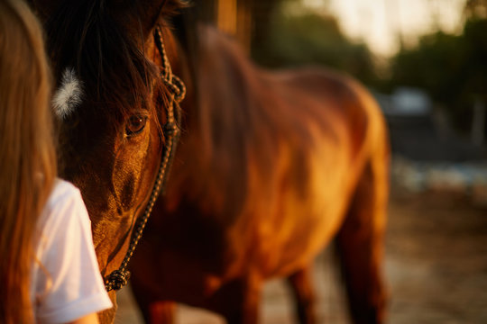 Girl face to face with a horse