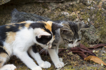 Two kittens look at stick on ground. Homeless kittens play with insect. Playful cat babies.