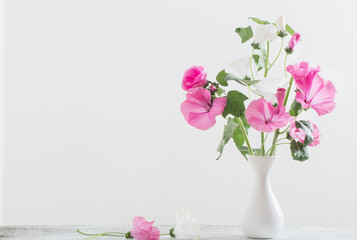 mallow in vase on white background