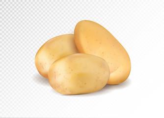 Realistic potato. Three potatoes grope. 3d vector eps10