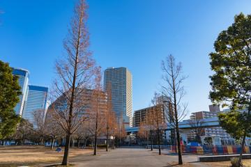 豊洲公園の並木