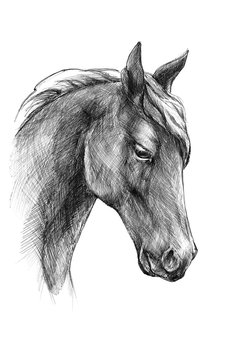 Sketch a horse head, black and white drawing