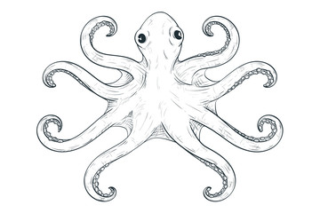 Octopus with symmetric tentacles. Outline hand drawn sketch