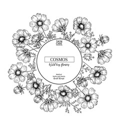 Hand drawn wild hay flowers. Cosmos flower. Medical herb. Vintage engraved art. Round composition. Good for cosmetics, medicine, treating, aromatherapy, nursing, package design, health care.