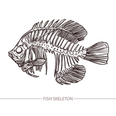 Fish Skeleton. Hand Drawn Sketch Style. Fashion Print And Hipster Poster