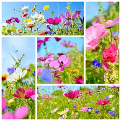 Blumenwiese - Sommer Collage - Grußkarte