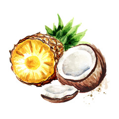 Coconut with pineapple. Pina colada elements. Watercolor hand drawn illustration  isolated on white background