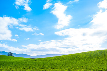 Stunning scene Cloudy and blue sky with green grassland. New Zealand agriculture in the rural area.