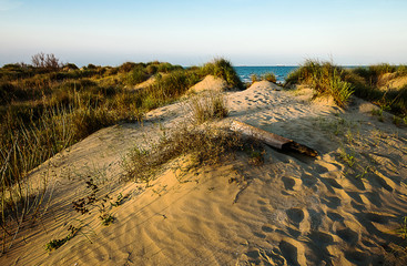 sandy dunes to the sea with sunset light