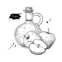 Apple vinegar vector drawing.  Hand drawn illustration. Glass bo