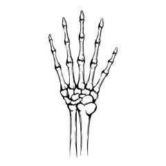Hand of the skeleton with joint and five fingers. Give me five gesture. Hand drawn human hand with bones isolated on white background. Grunge technique