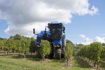 Grape Harvester Working In Vineyard In Bordeaux Region Of France