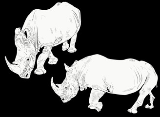 two white rhinoceroses isolated on black