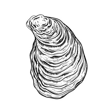 Oyster shell. Engraved style. Isolated on white background. Vector illustration