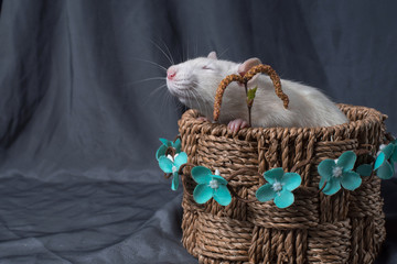 a rat is sitting in a basket with a flower