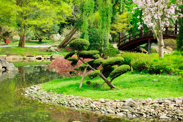 Beautiful japanese garden and pond in spring time.