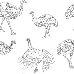 Ostriches seamless texture