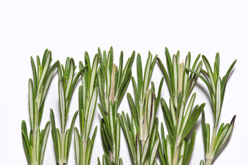 Vertical branches of fragrant and fresh rosemary on white background, close-up
