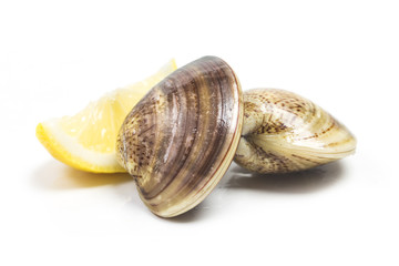 fresh raw Surf clam on white background