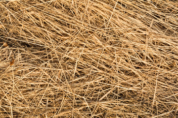 hay texture, chaotically arranged dry stems of plants, abstract background