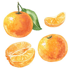Hand drawn watercolor mandarin set, delicious citrus fruits isolated on white background. Food illustration.