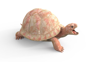 3d Illustration Albino Tortoise Isolate on White Background with Clipping Path. White Turtle.