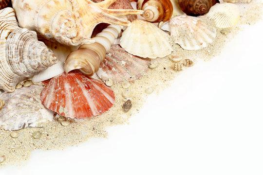 collection of seashells