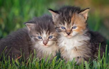 kittens in grass