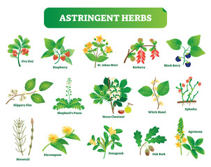 Astringent herbs vector illustration collection. Natural homeopathy wild plants botanic set.