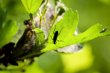 Käfersilhuette auf Blatt
