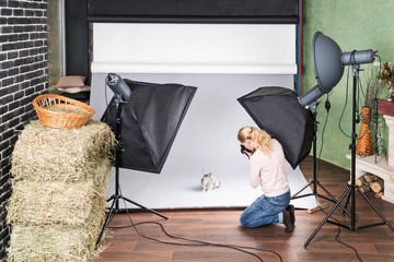 Female photographer in the process of photographing a rabbit on a gray background in a photo studio